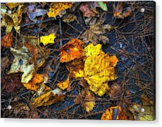 Acrylic Print featuring the photograph Colors Of Fall by Ludwig Keck