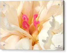 Colors Of Nature - Pink Centerpiece Acrylic Print by George Bostian