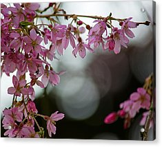 Acrylic Print featuring the photograph Colors Of Spring - Cherry Blossoms by Jordan Blackstone