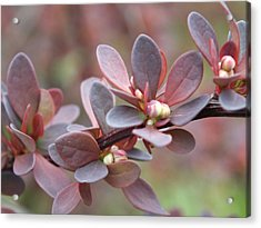 Acrylic Print featuring the photograph Colors Of Spring by Gene Cyr