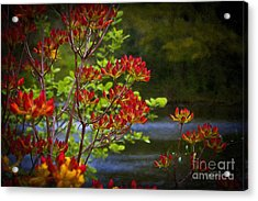 Colors Of Summer Acrylic Print by Cris Hayes