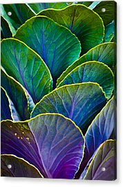 Colors Of The Cabbage Patch Acrylic Print