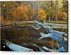 Acrylic Print featuring the photograph Colors Of The Forest by Jonathan Nguyen