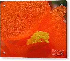 Acrylic Print featuring the photograph Colors Of The Sun by Patti Whitten