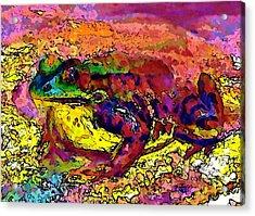 Colour Frog 2 Acrylic Print