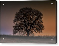 Acrylic Print featuring the photograph Colour Tree by Stewart Scott
