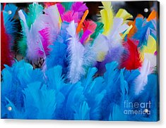 Coloured Easter Feathers Acrylic Print