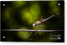 Colourful Australian Dragonfly At Insect Crossing Acrylic Print by Jorgo Photography - Wall Art Gallery