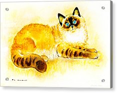 Colourpoint Cat Acrylic Print by Kurt Tessmann