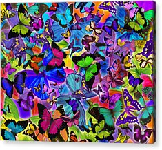 Colours Of Butterflies Acrylic Print by Alixandra Mullins