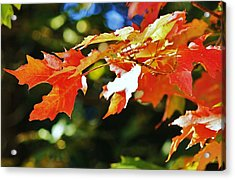Acrylic Print featuring the photograph Colours Of Fall by Al Fritz