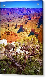 Colours Within The Canyon Acrylic Print by Tara Turner