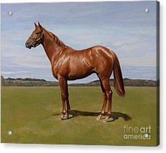 Colt Acrylic Print by Emma Kennaway