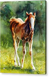 Colt In Green Pastures Acrylic Print by Bonnie Rinier