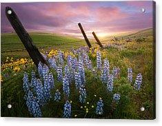 Columbia Hills Sunset Acrylic Print