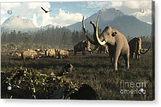 Columbian Mammoths And Bison Roam Acrylic Print