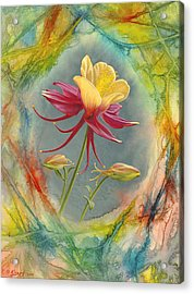 'columbine In Abstract' Acrylic Print by Paul Krapf