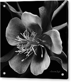 Columbine In Black And White Acrylic Print