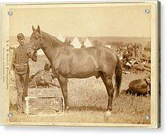 Comanche, The Only Survivor Of The Custer Massacre Acrylic Print