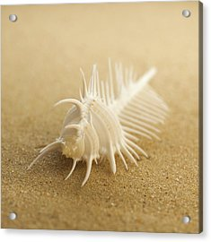 Comb Shell On Sand Acrylic Print