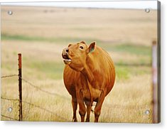 Acrylic Print featuring the photograph Come And Get It by Shirley Heier
