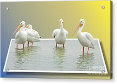 Come On In The Water Is Fine Acrylic Print