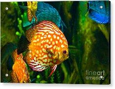 Come Swim With Us  Acrylic Print