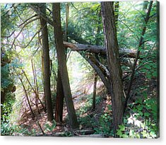 Come To The Woodland Acrylic Print
