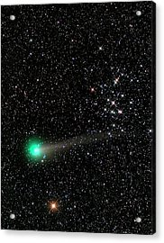 Comet C2013 R1 And Star Cluster M44 Acrylic Print by Damian Peach