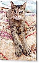 Comfy Cat Acrylic Print by Judy Via-Wolff