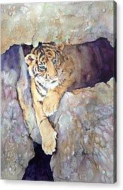 Tiger Cub Acrylic Print by Cynthia Roudebush