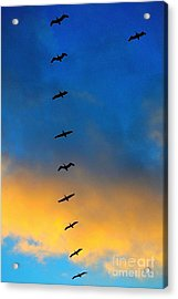 Coming Home 2 Acrylic Print by Theresa Ramos-DuVon