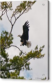Acrylic Print featuring the photograph Coming In For A Landing by Brenda Jacobs
