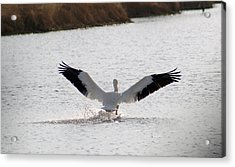 Coming In For A Landing Acrylic Print