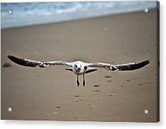 Coming In For A Landing  Acrylic Print by Sabrina  Hall
