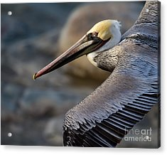 Acrylic Print featuring the photograph Coming Through by Dale Nelson