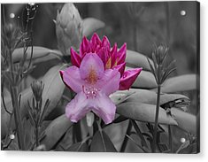 Coming To Life Acrylic Print by Aimee L Maher Photography and Art Visit ALMGallerydotcom