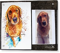 Commissioned Dog #1 Acrylic Print by Maria Barry
