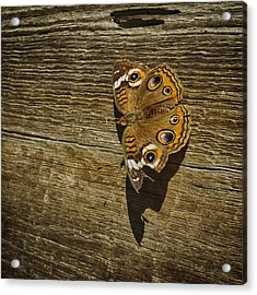 Common Buckeye With Torn Wing Acrylic Print by Lynn Palmer