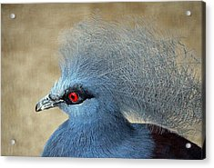 Common Crowned Pigeon Acrylic Print by Cynthia Guinn