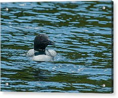Acrylic Print featuring the photograph Common Loon by Brenda Jacobs