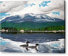 Common Loon On Togue Pond By Mount Katahdin Acrylic Print