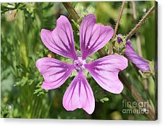 Common Mallow Flower Acrylic Print by George Atsametakis