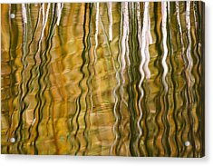 Common Reed Reflecting In Water Acrylic Print by Heike Odermatt
