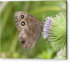 Common Wood-nymph On Thistle Acrylic Print