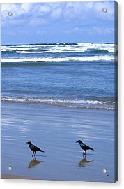 Companion Crows Acrylic Print