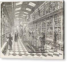 Comparative Anatomy Gallery, 1850s Acrylic Print