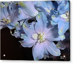 Compassion Limited Edition 2/33 Acrylic Print