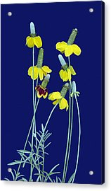 Complementary Colors  Acrylic Print