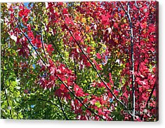 Acrylic Print featuring the photograph Complimentary Colors by Debbie Hart